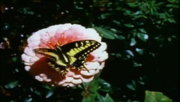 Science butterflies